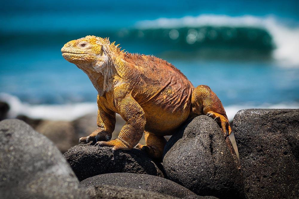 Ecuador-Islas-Galápagos